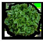 enciam-roure-verd