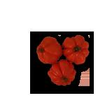 tomaquet-cor-de-bou