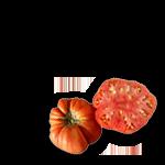 tomaquet-rosa